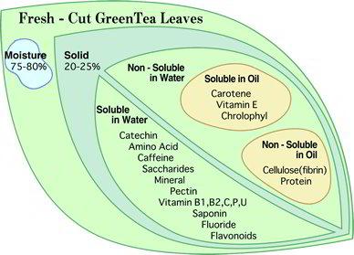 Green Tea White Tea Catechin Health Benefits
